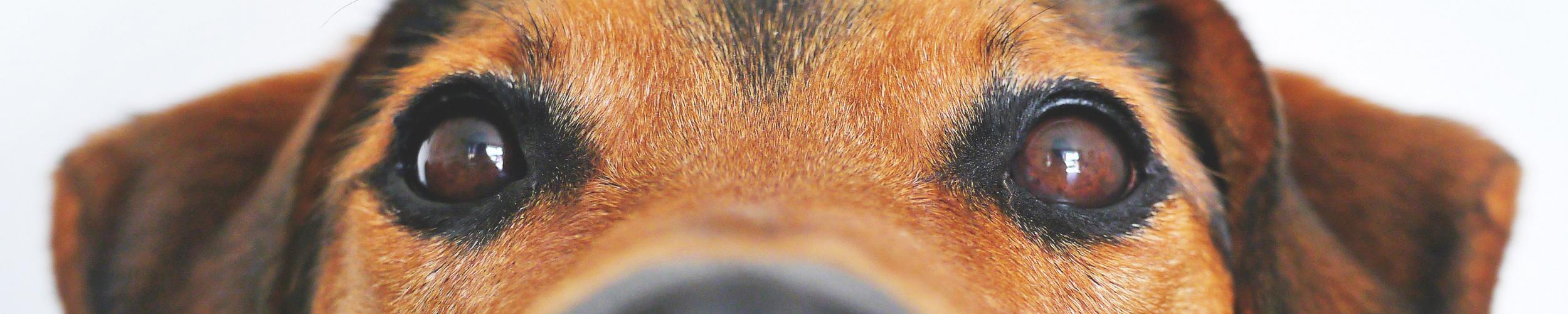 Info voor eigenaars van een huisdier