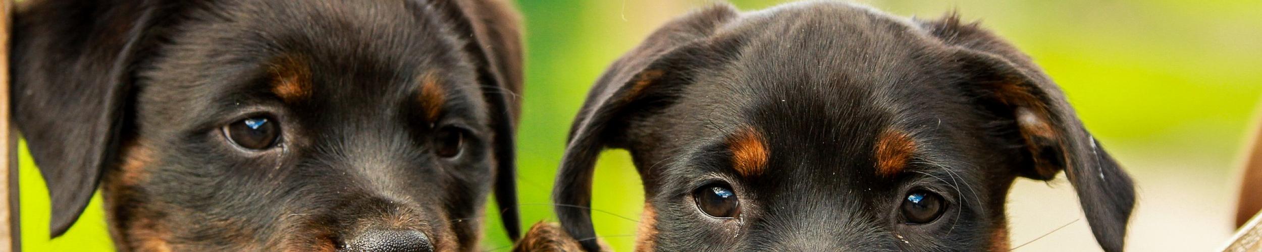 Medische beeldvorming kleine huisdieren